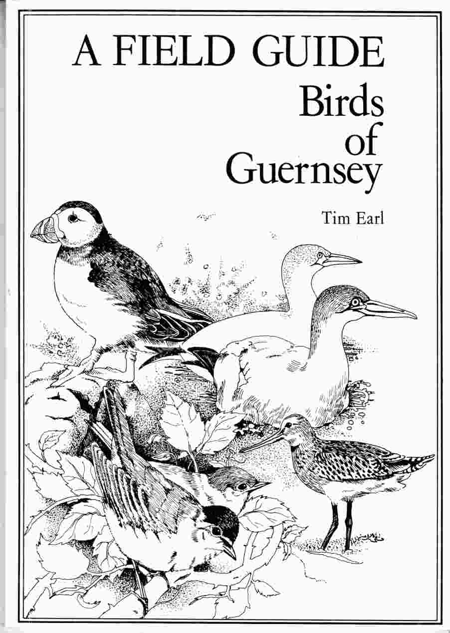 Image for A Field Guide Birds of Guernsey