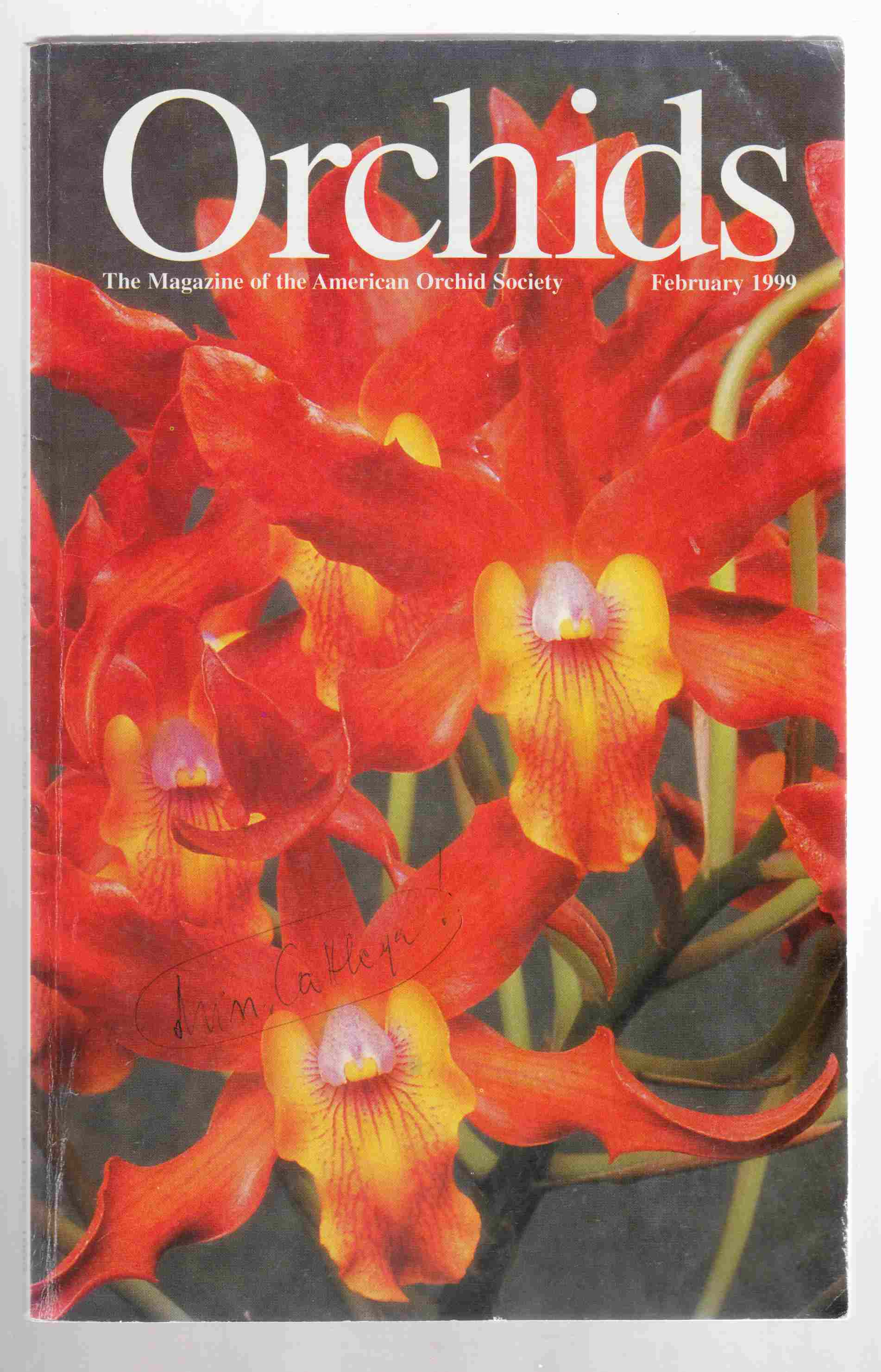 Image for Orchids Vol. 68, No. 2, February 1999