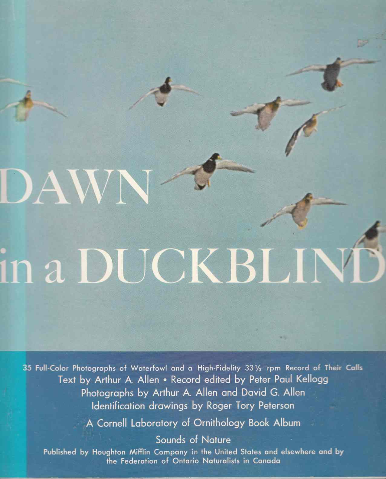 Image for Dawn in a Duckblind
